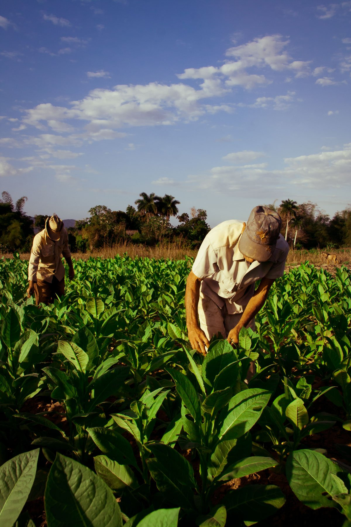 Reportage Viaggio Cuba – 092
