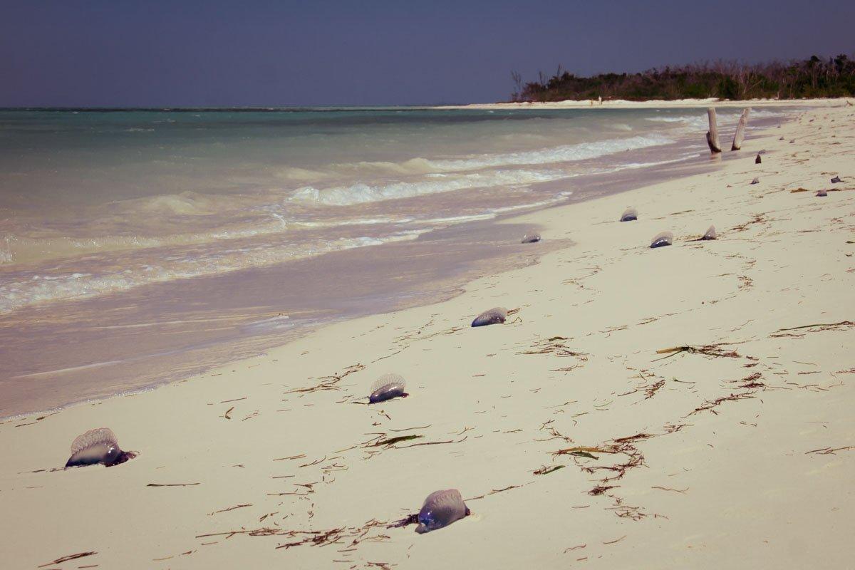 Reportage Viaggio Cuba – 101